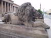 liverpool_lions