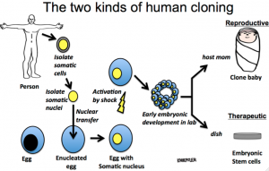 Reproductive Therapeutic Human Cloning